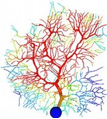 color illustration of neuron